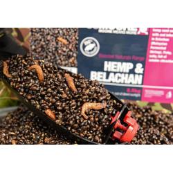 Seau de graine cuite CCMOORE Hemp - belachan - 2.5 kg